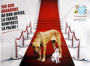 100 000 abandon d'animaux de compagnie en France