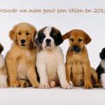 Choisir un nom pour son chien en 2013