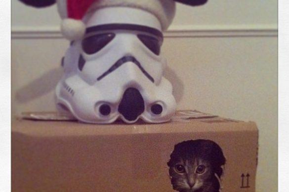 Chat caché dans un carton