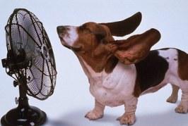 Comment protéger son chien et son chat de la chaleur