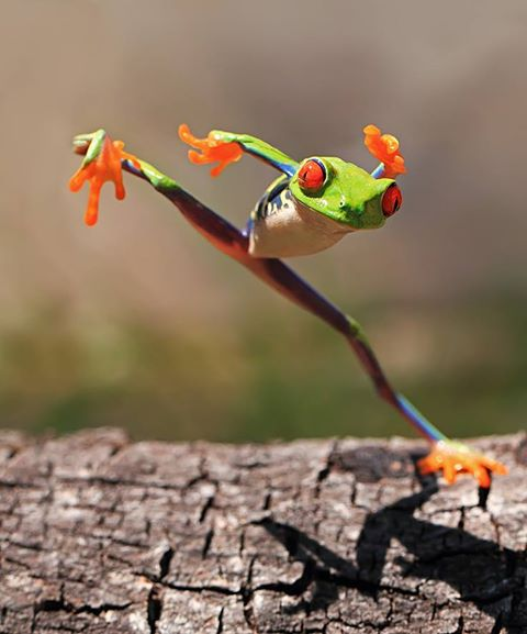 Kung Fu grenouille