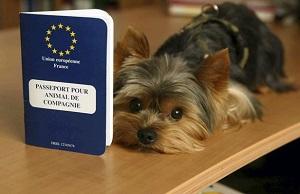 Passeport animal de compagnie