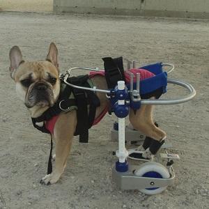 Kerdog pour la rééducation des chiens