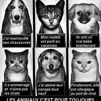 sensibilisation abandon animaux