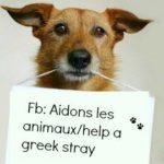 Les Amis des animaux de Pyrgos, association de protection des chiens errants en Grèce