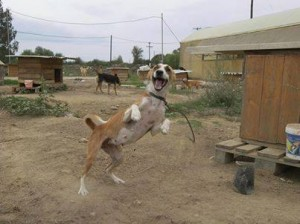 chien marrant refuge pyrgos