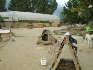 refuge chien pyrgos