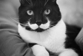 Top 10 des chats devenus célèbres grâce à leurs taches