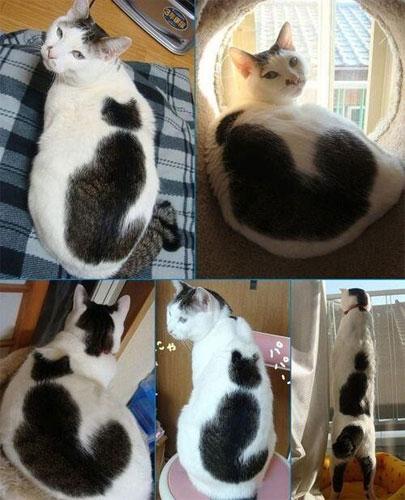 chat avec tâche en forme de chat
