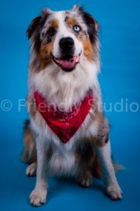 photo de chien Friendly Studio