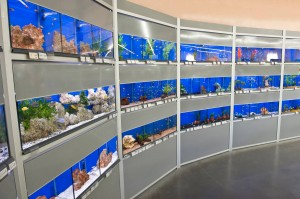 aquarium animalerie