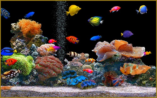 choisir des poissons pour son aquarium sur internet animaniacs. Black Bedroom Furniture Sets. Home Design Ideas