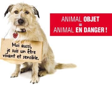 Les animaux ne sont pas des meubles