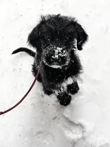chien dans le froid