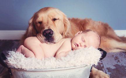 Chien et bébé