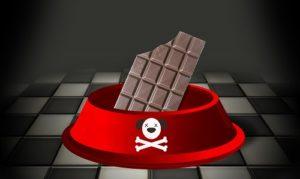 Chocolat toxique pour les animaux