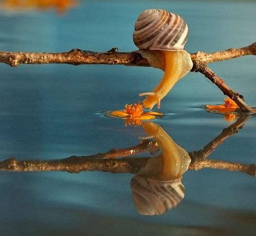 Escargot sur l'eau