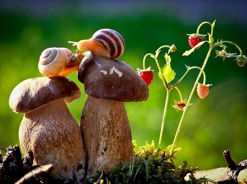 Escargots sur un champignon