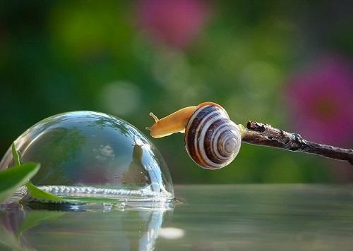 Escargot avec goute d'eau