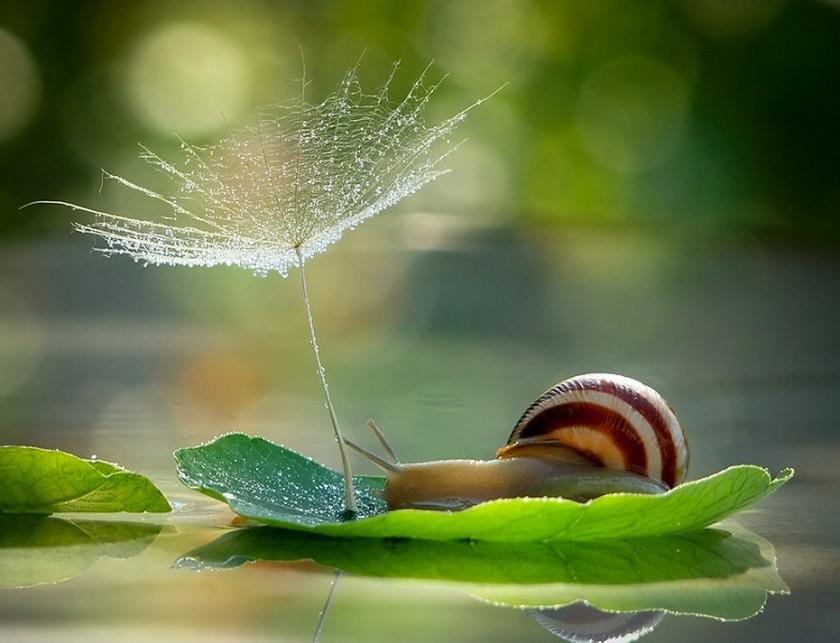 Escargot sur une feuille