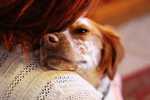 respecter votre chien