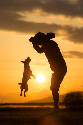 Joue avec ton chien