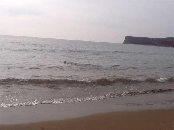 lion de mer sauvé
