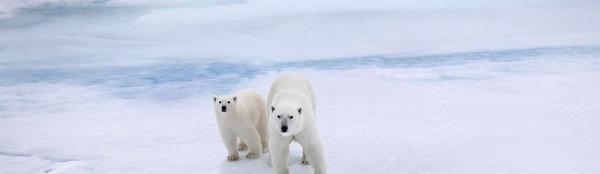 Sauvons l'Arctique - Animaniacs