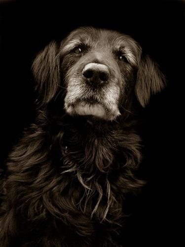 Vieux chien