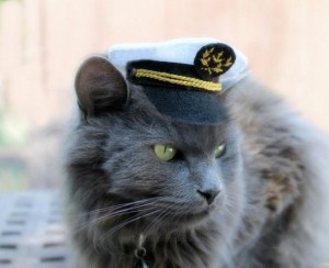 Chat capitaine