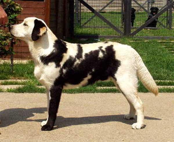 Labrator mutation