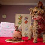 Poopy le plus vieux chat