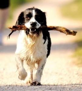 chien avec baton