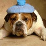 Santé du chien : que faire contre le mal des transports