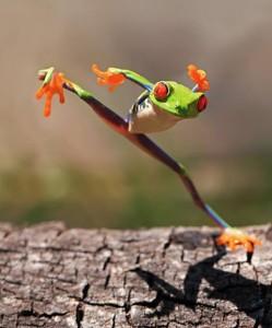 grenouille qui saute