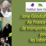 Le combat entre Jane Goodall et Air France pour sauver les singes des laboratoires