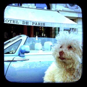 Cerbero à Paris