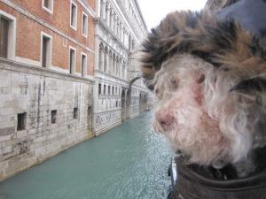 Cerbero à Venise