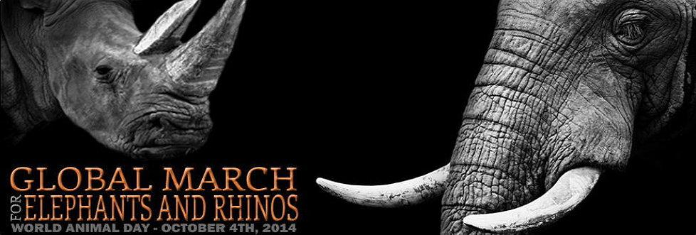 marche mondiale pour les elephants rhinoceros
