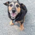 Tifus – Un vieux chien en attente d'adoption