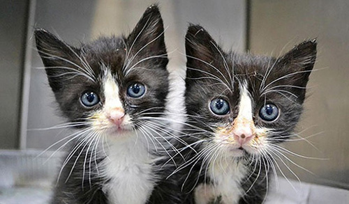 chatons noir blanc jumeaux