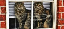 Des animaux jumeaux