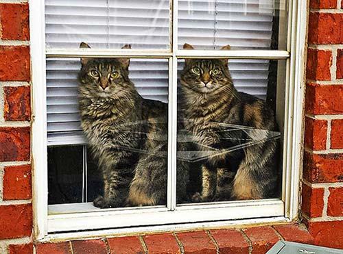 chats jumeaux
