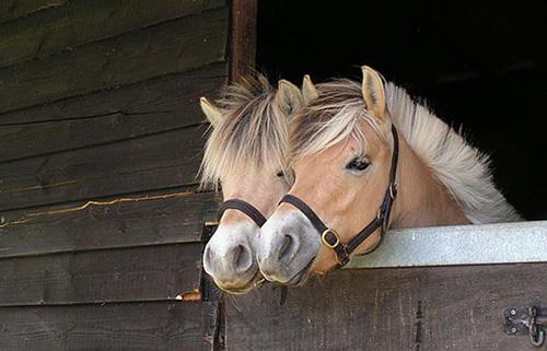 chevaux jumeaux