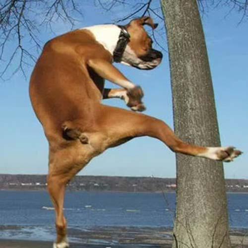chien ninja