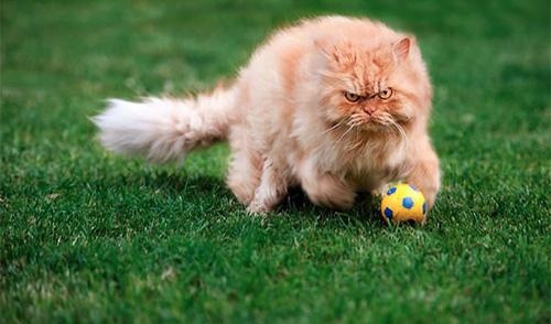 garfi chat grincheux