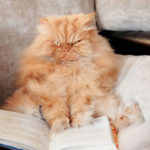 Garfi, le chat encore plus grincheux que Grumpy Cat