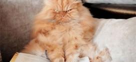 Garfi, le chat encore plus grincheux que Grumpy Cat