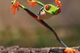 Top des animaux pratiquant le Kung Fu