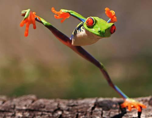 grenouille ninja